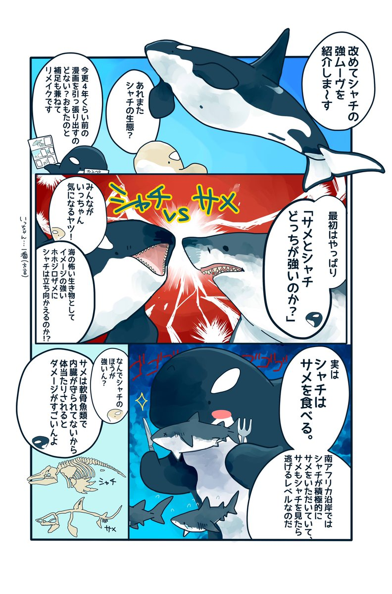 【おさらい&補足】シャチの生態マンガホホジロザメも食べるシャチが逃げる相手とは