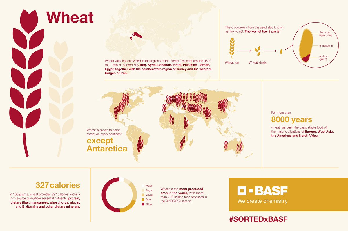 Did you know that #wheat is the most produced #crop in the world? We enjoyed celebrating this ancient ingredient together with you and @sortedfood during the last days 😍 Let us know what YOU like to create with wheat! #SORTEDxBASF #BASFInAg https://t.co/FqYA3Yyy7W