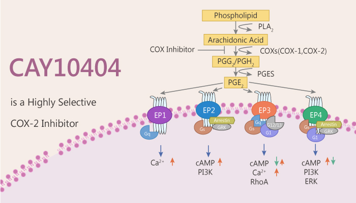 #CAY10404 is a highly selective #COX-2 #inhibitor with an #IC50 of 1 nM. CAY10404 exhibits no inhibition of COX-1 (IC50>500 µM). CAY10404 is a potent inhibitor of #PKB/#Akt and #MAPK and induces #apoptosis in NSCLC cells.#drugdiscovery. https://t.co/1wDirbpCKi https://t.co/yV2Y6V5NNx