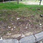 Image for the Tweet beginning: Majadahonda verde y limpia. #Majadahonda