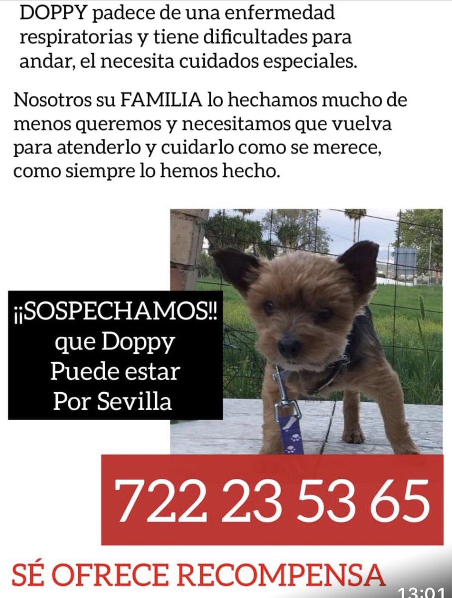 Hay pruebas de que las personas que robaron a este perrito están en el Vacié ( Sevilla ). Alguien tiene alguna forma de entrar allí y preguntar ? Están rotos de dolor y el animal es anciano con problemas respiratorios. No les sirve. Suponemos que lo darían. 648714008 722235365 https://t.co/ZxebKOJljF