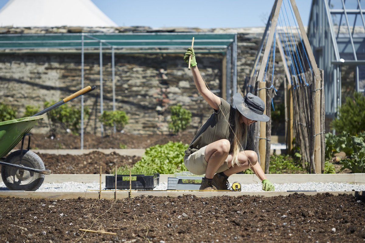 Andy Moore, Head Kitchen Gardener at #THEPIGatHarlynBay, talks to @Alitex about our latest greenhouses over in #Cornwall, which will be growing mustard leaf, rocket, komatsuna and lots of other tasty leaf garnishes this winter 🌱🍴: https://t.co/MiaUCa5SqG https://t.co/bsULYX5ksN