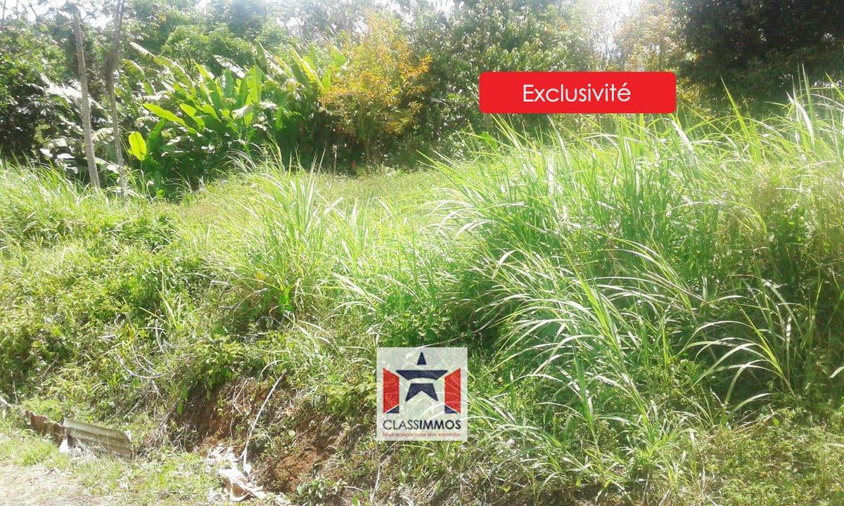 #Vente 🍃 Terrain de 1000 m² à 📍 SAINTE-LUCE (97228) 🍃 👉 https://t.co/rBGRCuU4ZB . #classimmos #immobilier #martinique #sainteluce #westindies #avendre #forsale #realestate #realestateagent #investment #investir #terrain #home #agentimmobilier #immo #paradiseisland #ilovemyjob https://t.co/wtwN1FyNvB