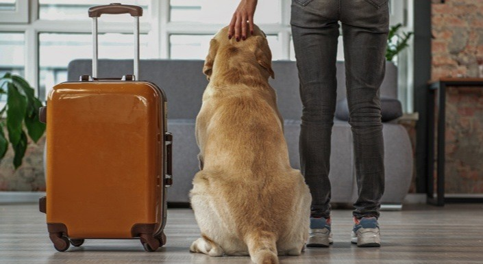 With international travel plans cancelled, pets are being included in their family's local adventures. Before setting out, check out Dr Sperry's tips for prudent #pet travel: https://t.co/rLauVlqgSW 🚗 https://t.co/XZB0h4YCiC