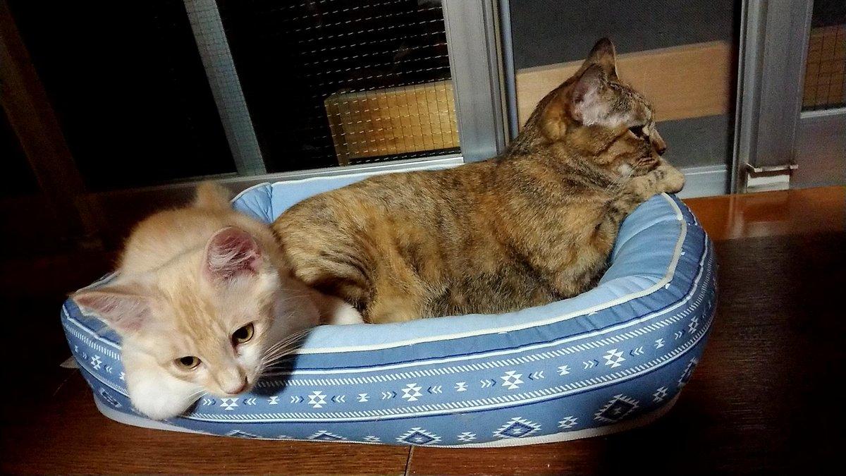 最近のサラダは何でもエコーのマネです  変な寝相もマネです😆  #駒猫エコー #保護猫サラダ #猫 #保護猫 #猫好き #猫の居る生活 #猫好きさんと繋がりたい https://t.co/NTI4FYbd9N