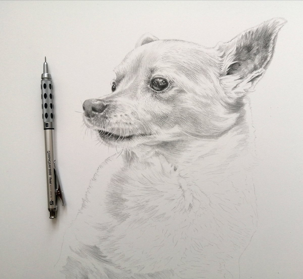 Focusing on the shadows between the fur. White dogs in graphite. 🖤 #workinprogress #dogs #graphite #pencilart https://t.co/nyBBdGNaXk