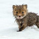 Image for the Tweet beginning: Espectaculares fotografías de la Tundra