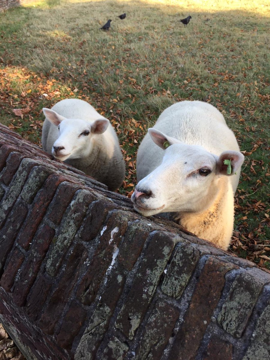 Happy Friday! #weekend #smiles #travel #farmanimal #sheep https://t.co/5O7OIwyWJl