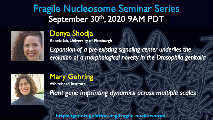Register for [Sept 30, 9am PDT] #FragileNucleosome seminar with talks by Mary Gehring (@WhiteheadInst) about epigenetics in plants and Donya Shodja (@DonyaNiyaz from @RebeizLab) about evolution of enhancers in Drosophila. ATTN: @FlyJedi. Link here: https://t.co/Mm9HQ2zq25