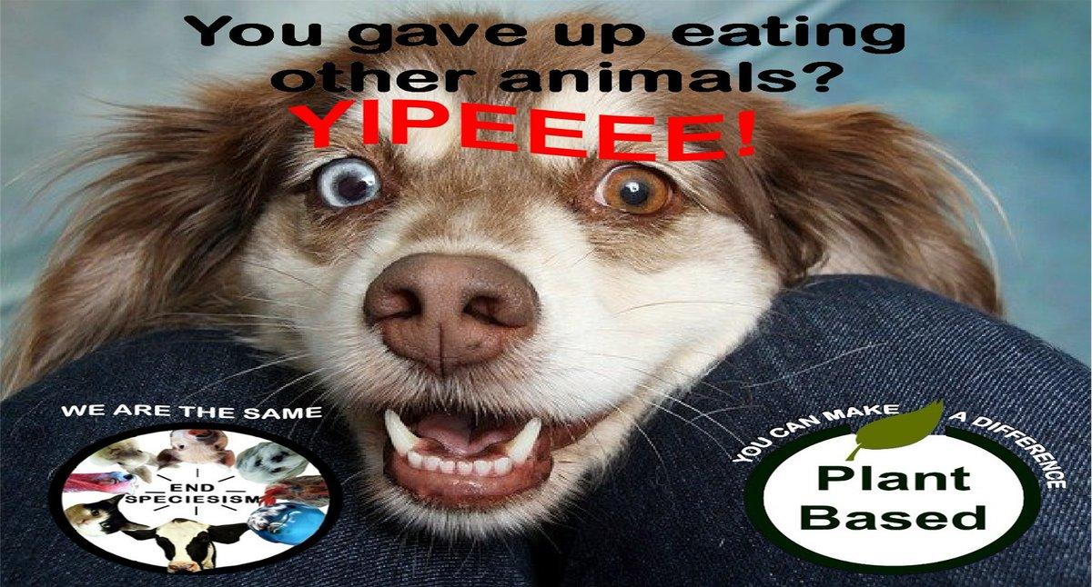 #enddiscrimination #plantbased #endsuffering #dogthoughts #happydoggo #happydoggy #happypups #dogphotos #dogoftheweek #puppypic #dogpic #dogpictures #dogmemes #dog #doggosbeingdoggos #yipee #whatsfordinner #wearethesame #nodifference #equalityforall #bekindtoallkinds #youcandoit https://t.co/R3WKl8Q0fl