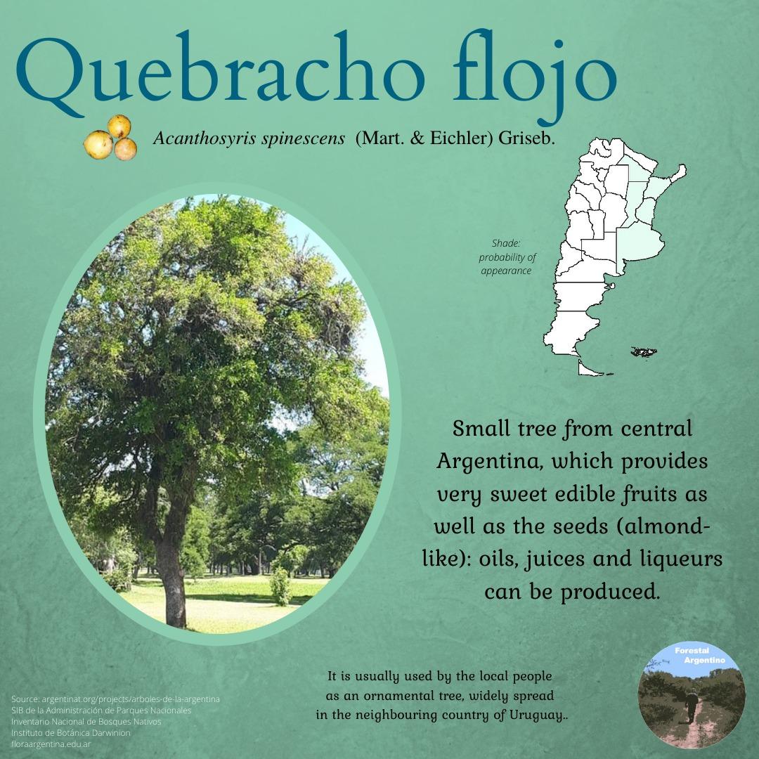 Today is Quebracho Flojo turn ! #quebracho #forests #argentina #nature #environment #ClimateAction #ClimateChange #sustainable https://t.co/kYcPg9qzfg