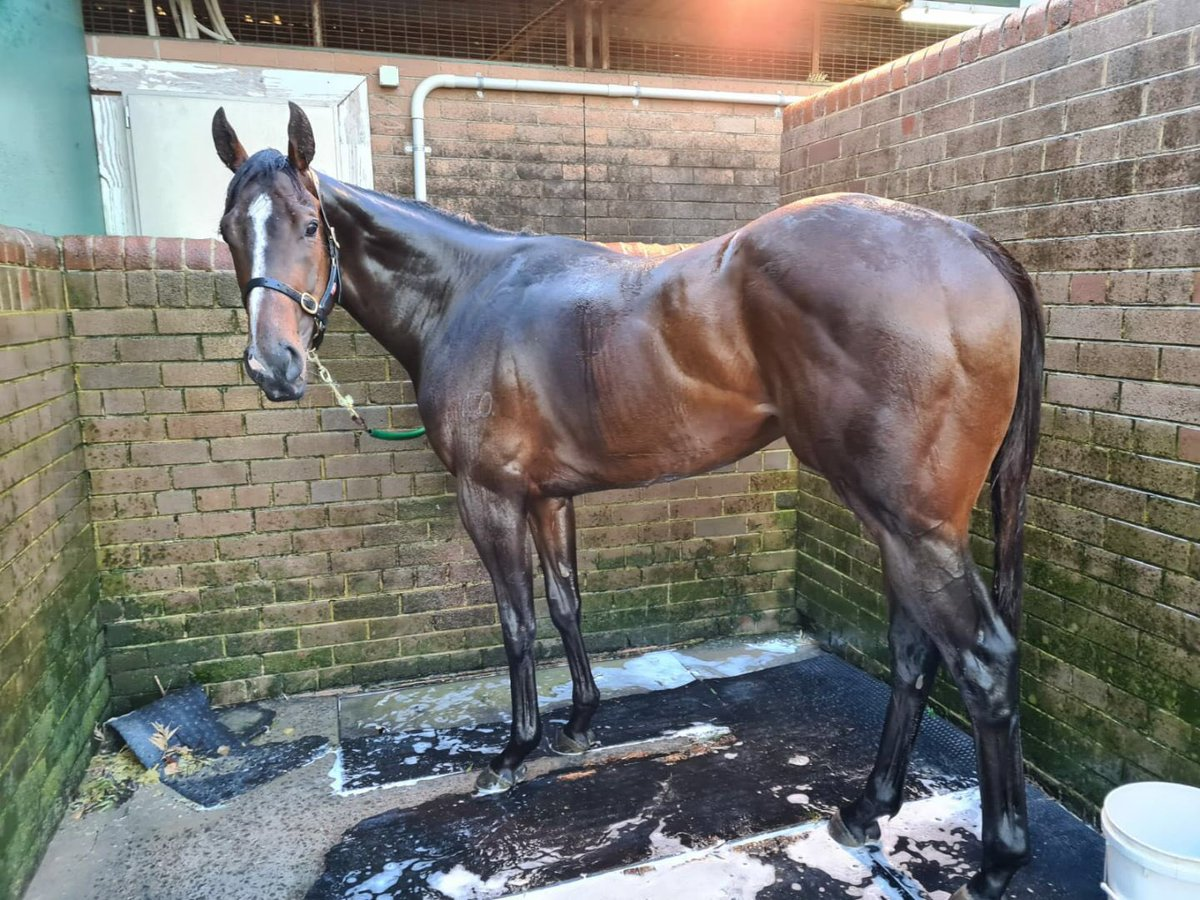 Rothfire has just been shampooed -will smell like a rose 🌹 prior to winning same 😉 @RadioTABAus @JamesBester4 @racing_qld - #freak