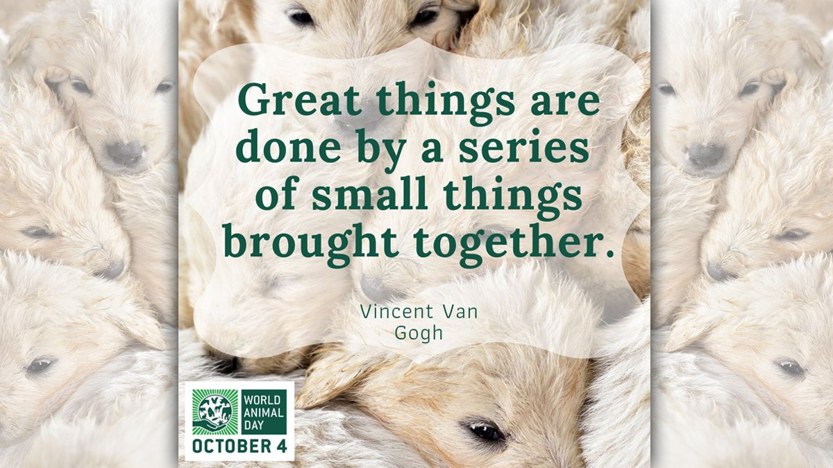 We can achieve so much this #WorldAnimalDay (October 4) 🌏 if we ALL do something – however small!  https://t.co/RdtRwHTrRo #animalwelfare #letsdothis https://t.co/Wrgp3CxN8Z