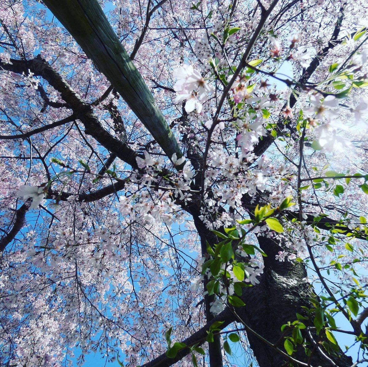 #TLを花でいっぱいにしよう  #春 https://t.co/JQaptGImmD