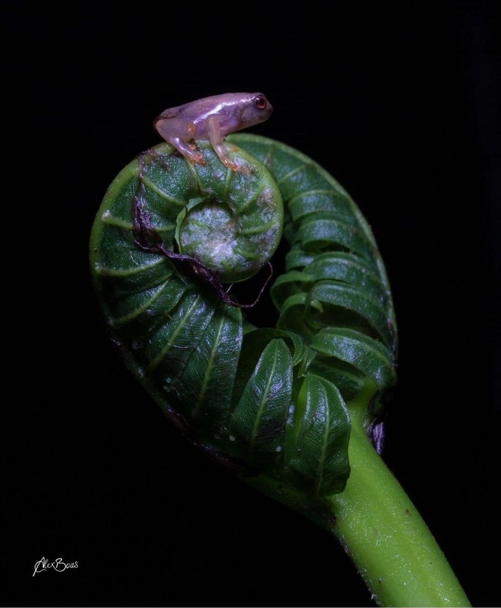 Tamandua Ecolodge & Reserve 📍 Puyo, #Ecuador🇪🇨 IG 📸 @alexboasphoto #Naturaleza #Aventura #Amazonía https://t.co/rX7xPQoc0e