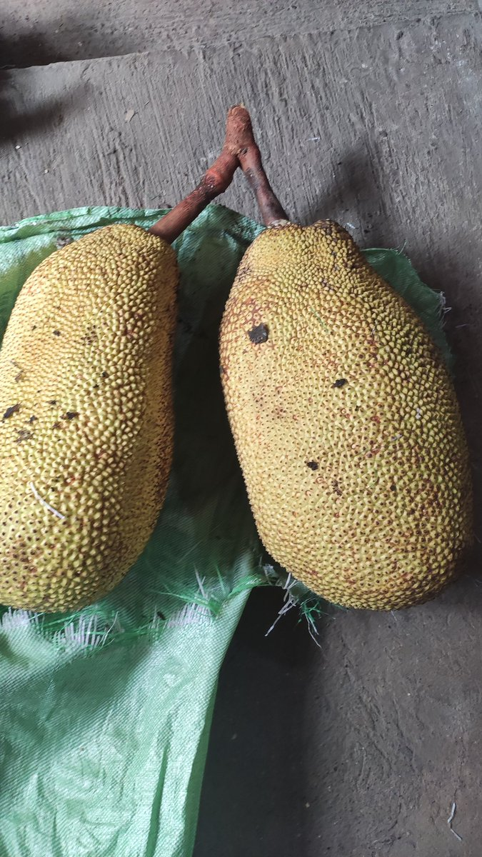 Salamat sa model, hahaha  #JackFruit #lovefruit #home https://t.co/d6JXxMG92s