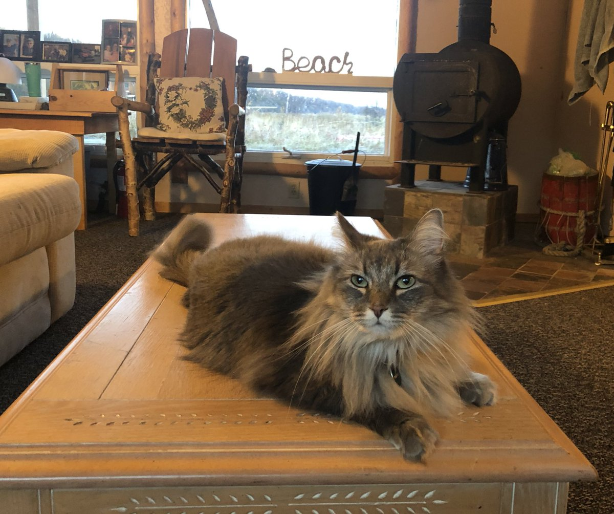 Hanging out with Dad at the cabin!  Isn't it great when your the only cat and don't have to compete for attention? 😹😻 #Caturday #CatsOfTwitter https://t.co/nCGMUDKdJg