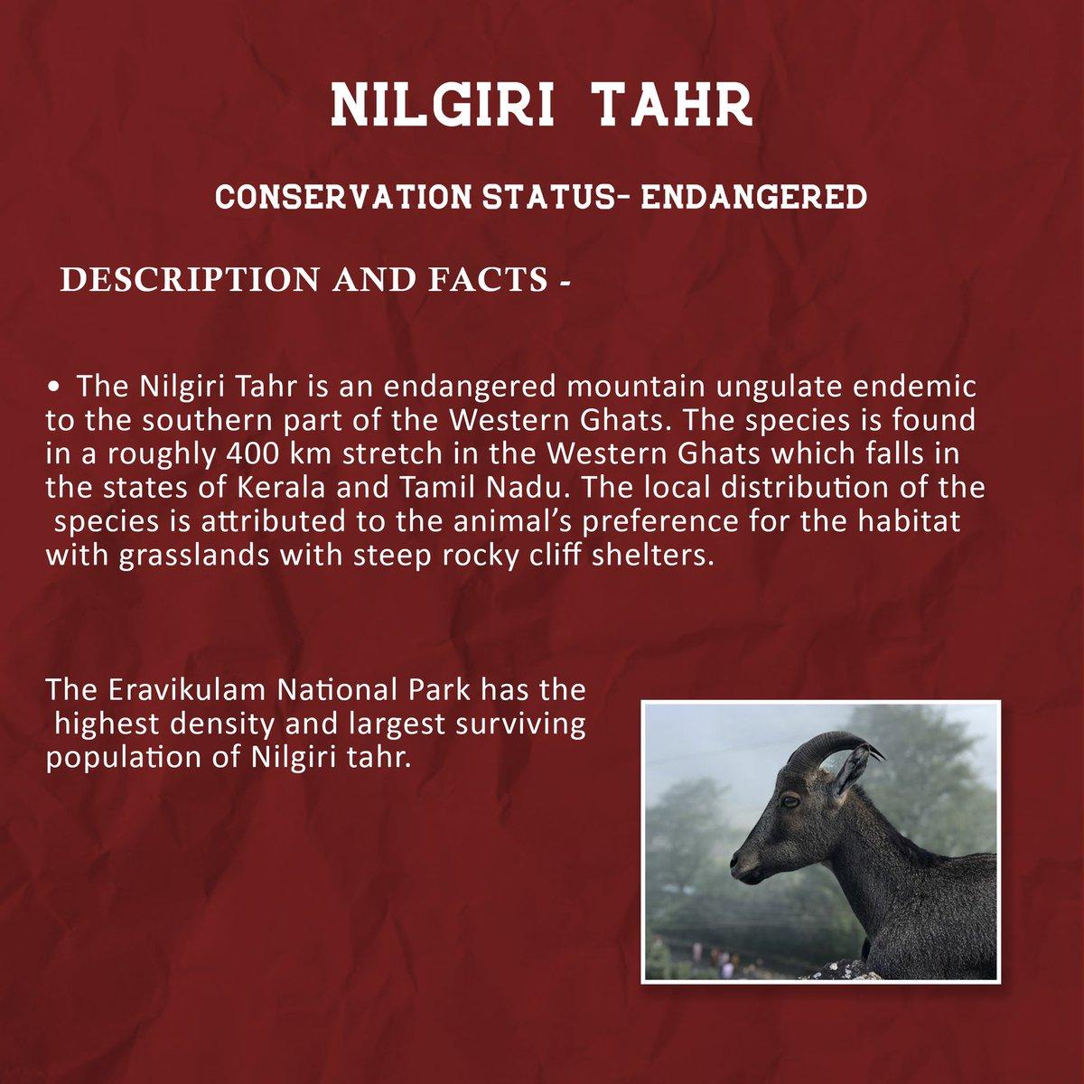 #NilgiriTahr  #WesternGhats  #wildlifeweek2020 https://t.co/tskeknzdWR