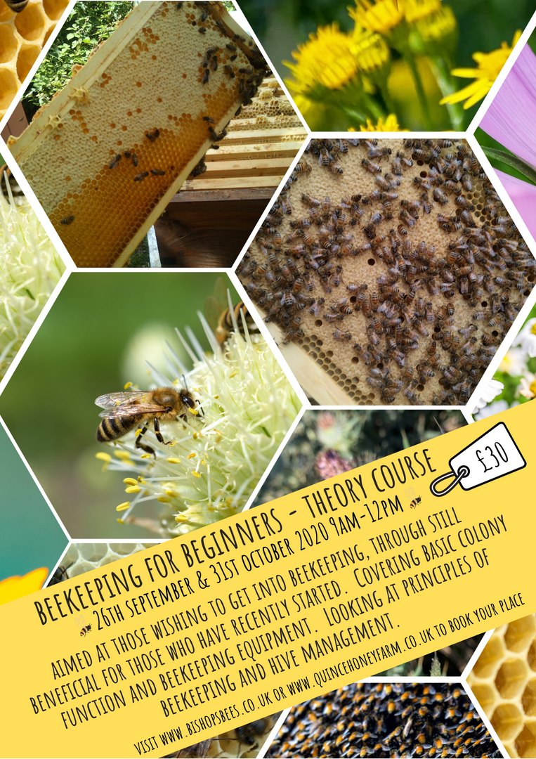 BeesBishops photo