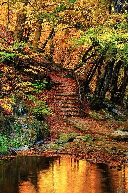 Steps are intriguing because you never know where they lead and that's an irresistible thought. When you get to the top, you may discover a place with a view that makes you smile. Your mind resets and things that made no sense suddenly become clear. #amwriting #writingcommunity https://t.co/OqtlopLLmW