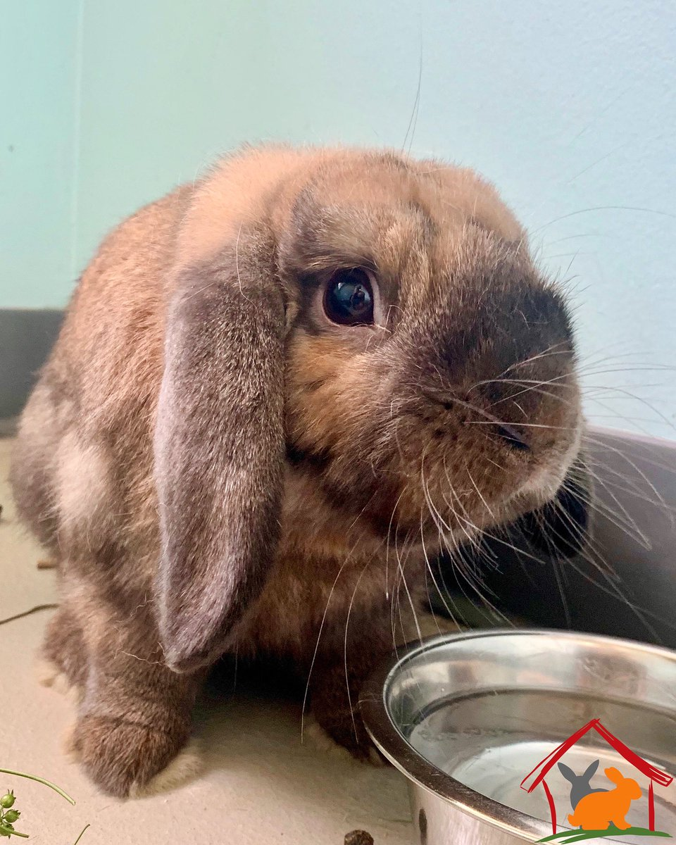 EARL is a mood, and we are here for it!  But for real, this 1.5 year old guy is healthy, happy and very friendly. He was surrendered due to allergies and no fault of his own. Earl's snuggle-bunny reading is off the charts! 📈  Apply today!! #aliverescue #theHUTCH https://t.co/mNX9kYLJk0