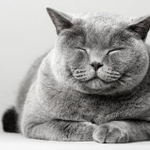 猫に好かれるコツ!「ゆっくりまばたき」をすると自分の飼い猫以外にも効果あり?