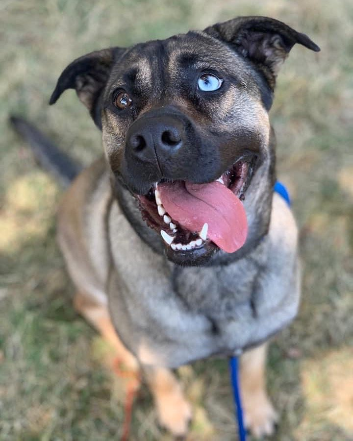 It's #feelgoodfriday and AZUL is here to cheer you on through the final push!   Catch your eye? Find out about this happy, energetic beauty-queen at https://t.co/FHGaxCOzkP. 🧡 #aliverescue https://t.co/wmYPxQ9FJ8