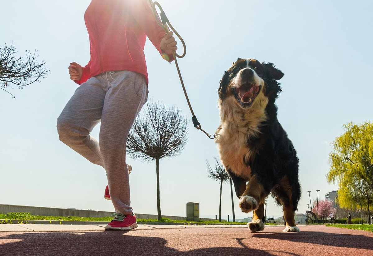 Calling all runners! Your favorite workout can help dogs get adopted. Every signup for the Virtual Music City Run/Walk (October 16-25) supports shelter/rescue grants to help dogs get loving homes. Run anywhere! Sign up: https://t.co/pORFg25ZgZ #Run4Rescue https://t.co/hnU0PGkuZb