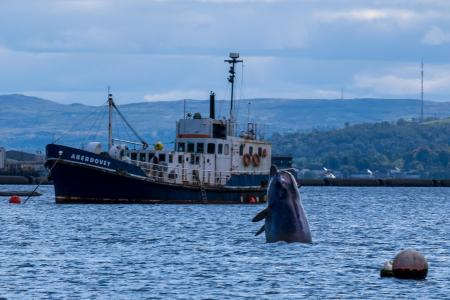 🐋 Three northern bottlenose whales have been wowing onlookers in Garelochhead after the unusual guests arrived in the Gare Loch last week. Read more: helensburghadvertiser.co.uk/news/18753487.…
