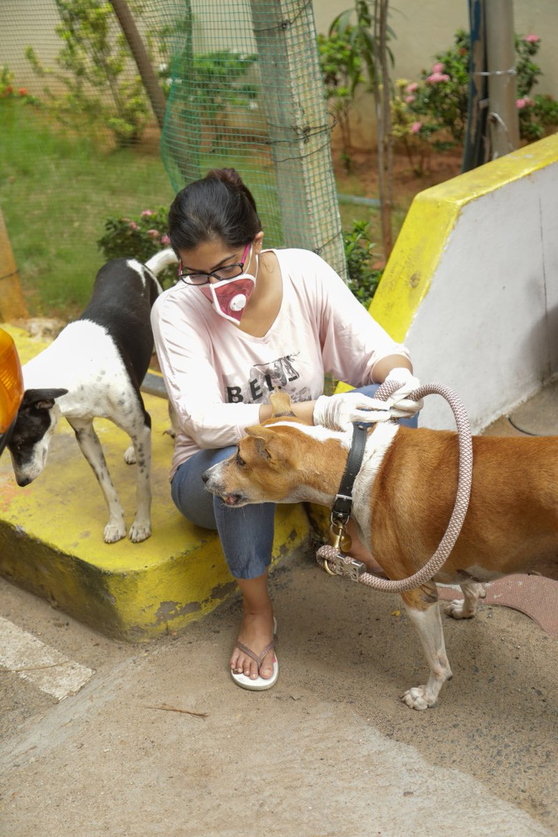 Kudos👏👏👏  Varalaxmi Sarathkumar kick started the Anti Rabies Vaccination Drive organised by her Save Shakti Foundation and Royal Canin for 1000 street dogs in Chennai  @varusarath #saveshakti @teamaimpr https://t.co/Xm9Ic2w8OV
