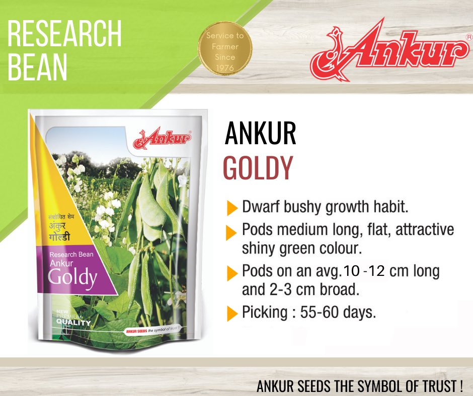 Research Bean - ANKUR GOLDY  #seeds #bean #research #researchseeds #agriculture #germination #processing #production #marketing  #farmer #agriclturelife  #agribusiness #researchanddevelopment #district #village #farming #india #business #trust #ankurgoldy #vegetable #ankurseeds https://t.co/5fYi9fcDw7