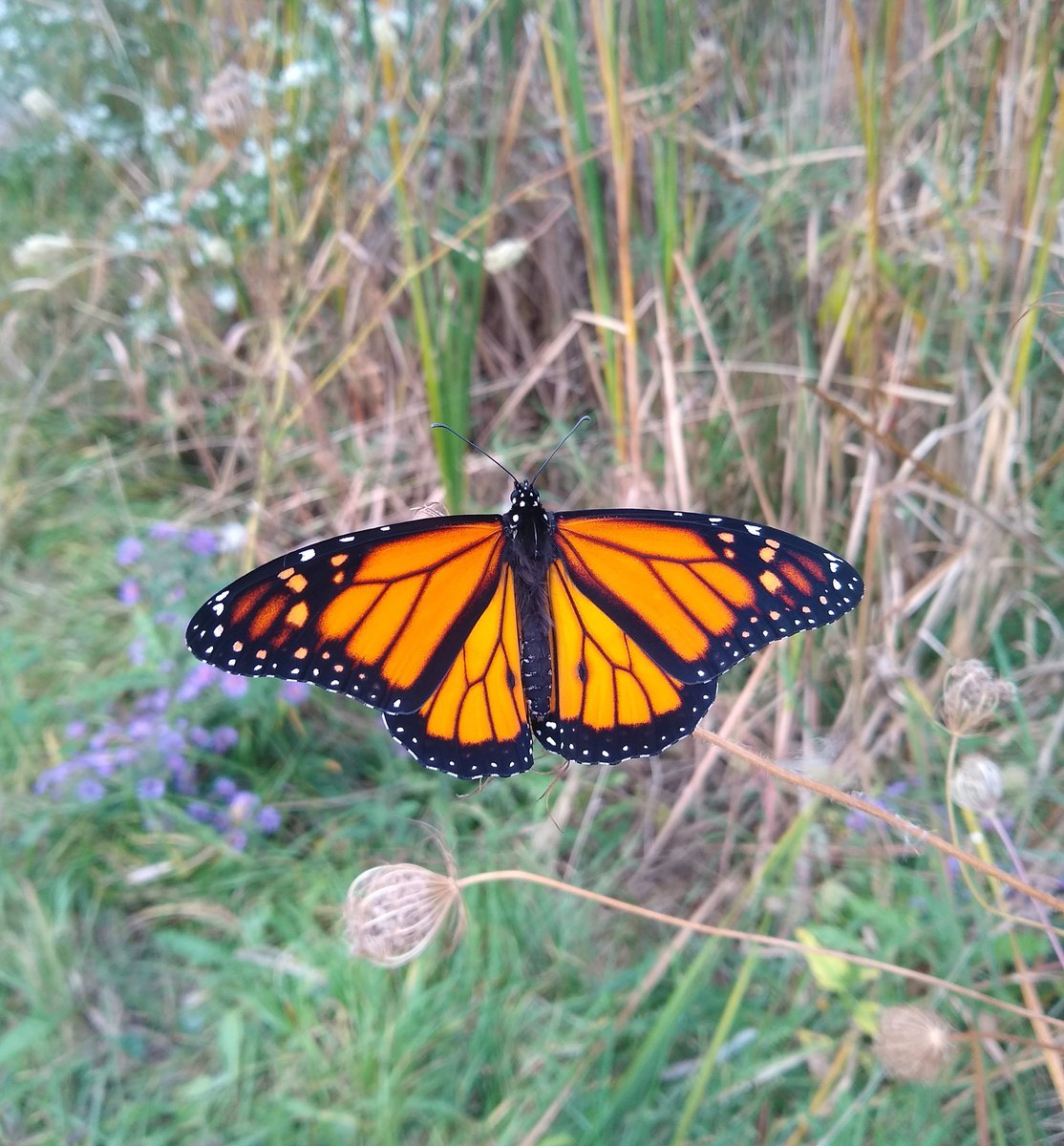 #monarch https://t.co/7yhIeDTpCH