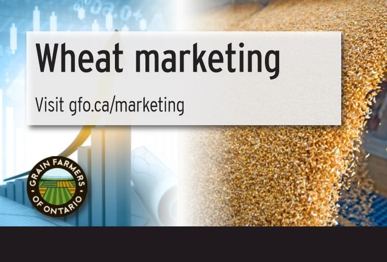 Have questions about marketing your wheat? Check out the Wheat Marketing section of our website for information about our marketing strategies and contact our Marketing department to take advantage of our programs. #WheatMarketingMonday buff.ly/3iVH96R