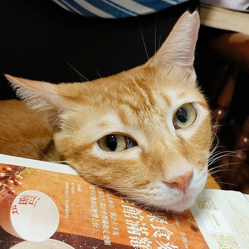 . 下了一整天的雨 有點悶… . 嗯… 等一下來玩貓奴大叔好了! (這樣想心情好像有好一些些) . . #柚子多樂貓爺堂 #柚子多樂貓奴  #yuzutoro #yuzutorocats #yuzutorocatslover #BazzCat #巴斯貓  #柚子多樂日常  #gingercat #orangetabby #orangecat #貓 #猫 #cat #貓貓 https://t.co/2z4GicgVyh https://t.co/Nb3bCrCdL7