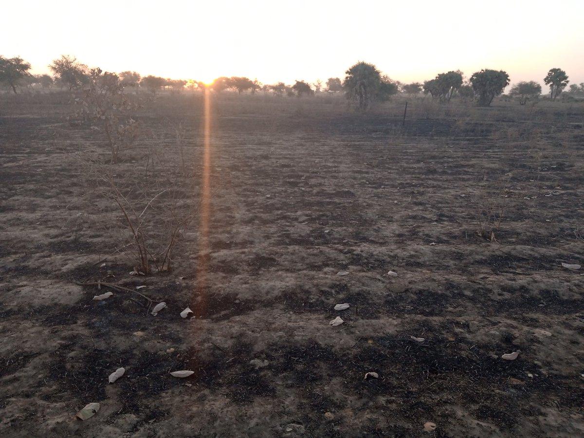 Mon premier projet dans l'agrobusines, la noix de cajou. Voici bientôt un an que je n'étais plus reparti dans ma plantation détruit par un incendie d'origine inconnue. Plus de 50 anacardiers. Dégouté, énervé, j'ai gardé espoir.  La résilience m'a montré une nvelle voie, @AdjiRiz. https://t.co/EaTu1igGm9