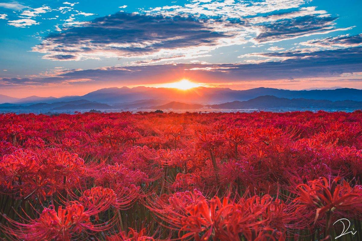 極楽浄土に咲く華。