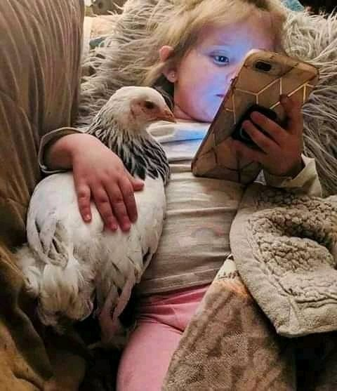 I can't dare buy this kind of pet for my kids,  they may even slaughter the moment I go away for a short call😂😂😂 #whites joke too much# https://t.co/dzqoybFnIH
