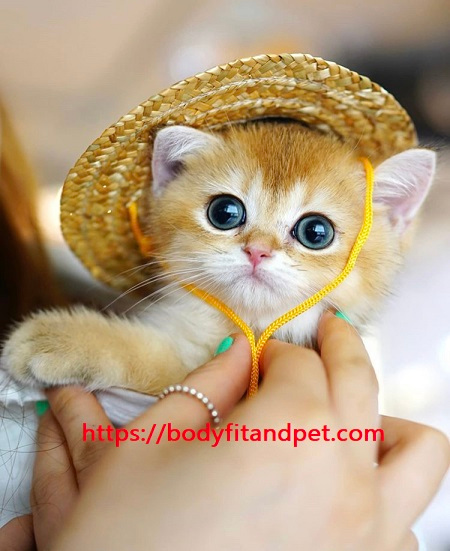 #catsofinstagram #cats #kitty #instacat #catstagram #catlover #cute #kitten #meow #pet #pets #catoftheday #love #catsagram #kittens #catlovers #animals #lovecats #petstagram #animal #catsofig #adorable #ilovemycat #instagood #instagramcats #dog #photooftheday #catlady #kittycat https://t.co/KB427xLyz3