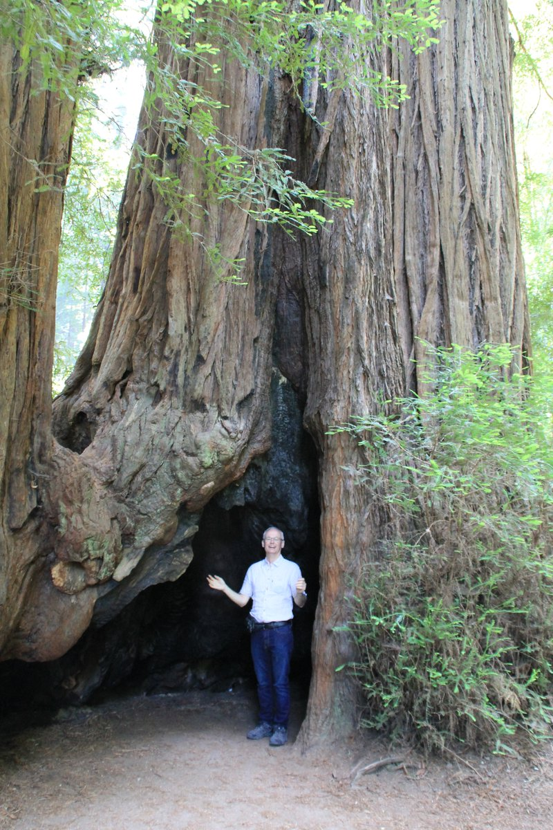 Among redwood trees in California. #redwood #trees #woods #forests #nature #NaturePhotography #naturetherapy ##BeautifulNature https://t.co/1wKFow0CIG
