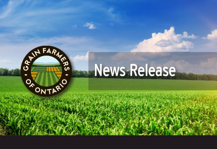 Grain Farmers of Ontario, @AtlanticGrain and Producteurs de grains du Québec have launched a joint campaign to raise awareness with the public of the devastating consequences for all Canadians if Canadian grain farmers go out of business. Read the release: buff.ly/36bdfrr