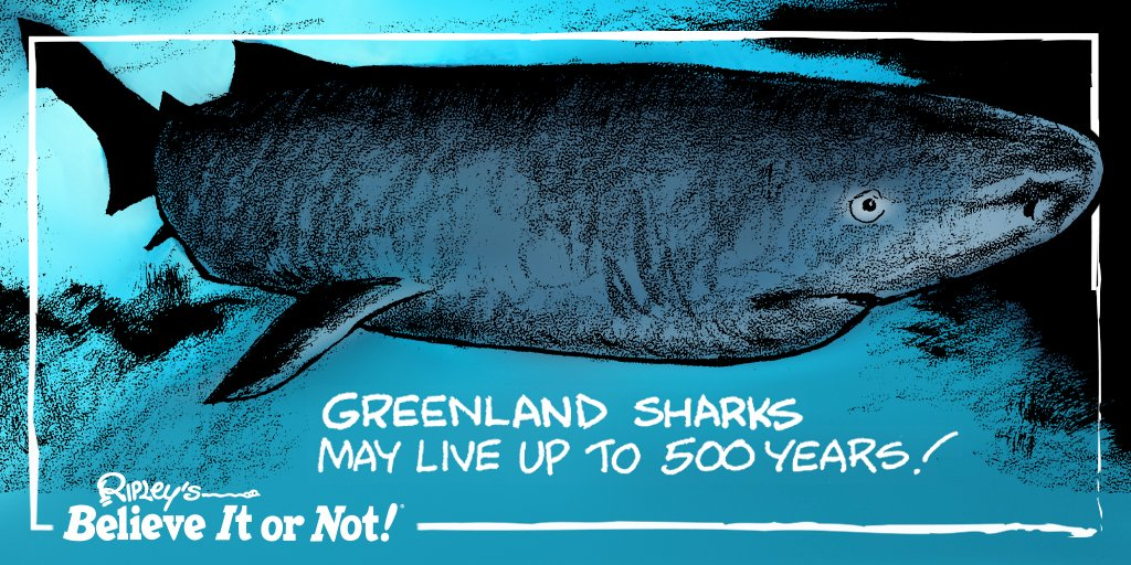 Grandpa shark… *doo doo doo* 🦈 #GreenlandShark https://t.co/s6o5rl7ZpQ https://t.co/NN5mrRESyy
