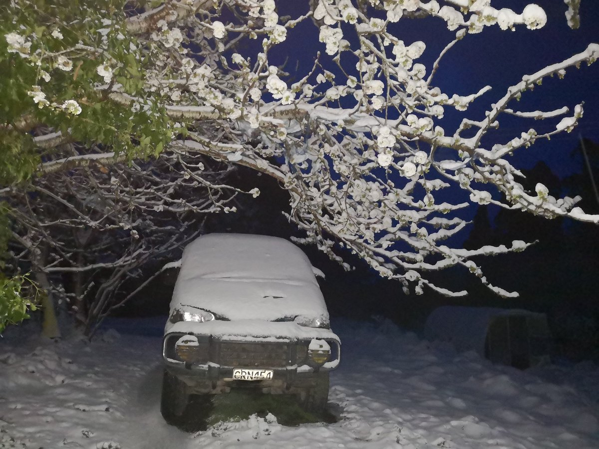 A farm vehicle, a cherry tree and yes snow, Dipton.