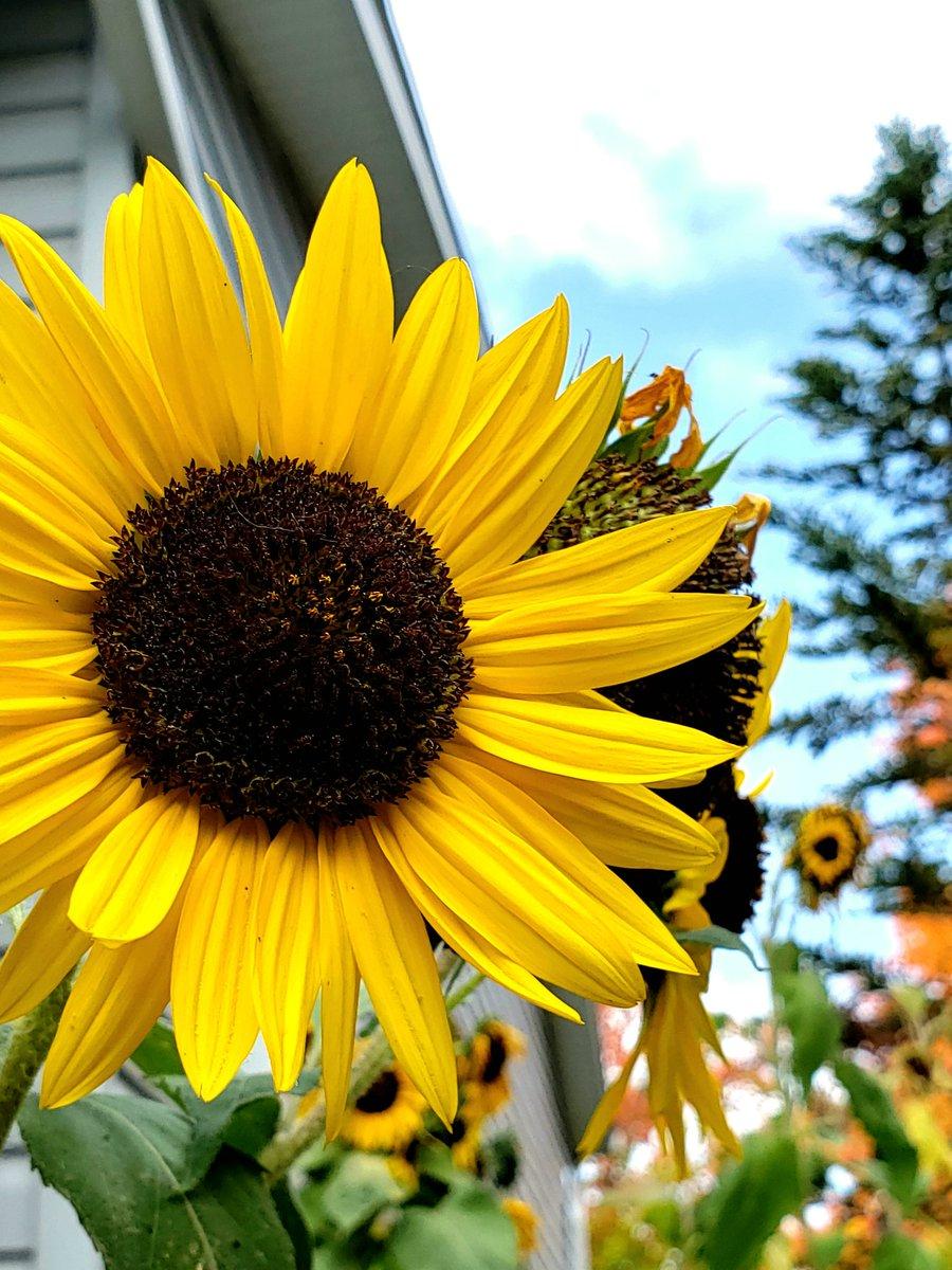 Sunflower Skies @BrashleyDebbie @lynda3035 @BloomNight2 @Marina935home @1gingerbeauty @AnaGascaa @Axolotl_2019 @FColobus @Lpowell588Lady @cobalttash @LindsayPH @jypseywheel @MauSupercat https://t.co/C0kUVUNilH