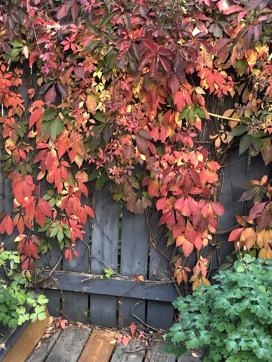 Those are great colours! #fall #autumm #leaves #red #Canada and it's now somewhere around 30'C with the humidity! https://t.co/lGuJNxeqeM