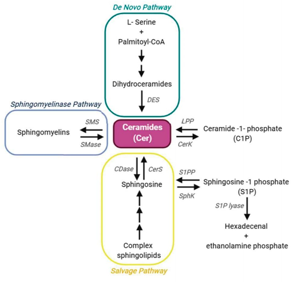 """Simon et al. examine the involvement of #sphingolipids in retinal physiology and diseases.  """"Sphingolipids as Critical Players in Retinal Physiology and Pathology"""" – #eye #retina #apoptosis #inflammation  https://t.co/5MZghcE08z https://t.co/tyIv6MFfZ0"""