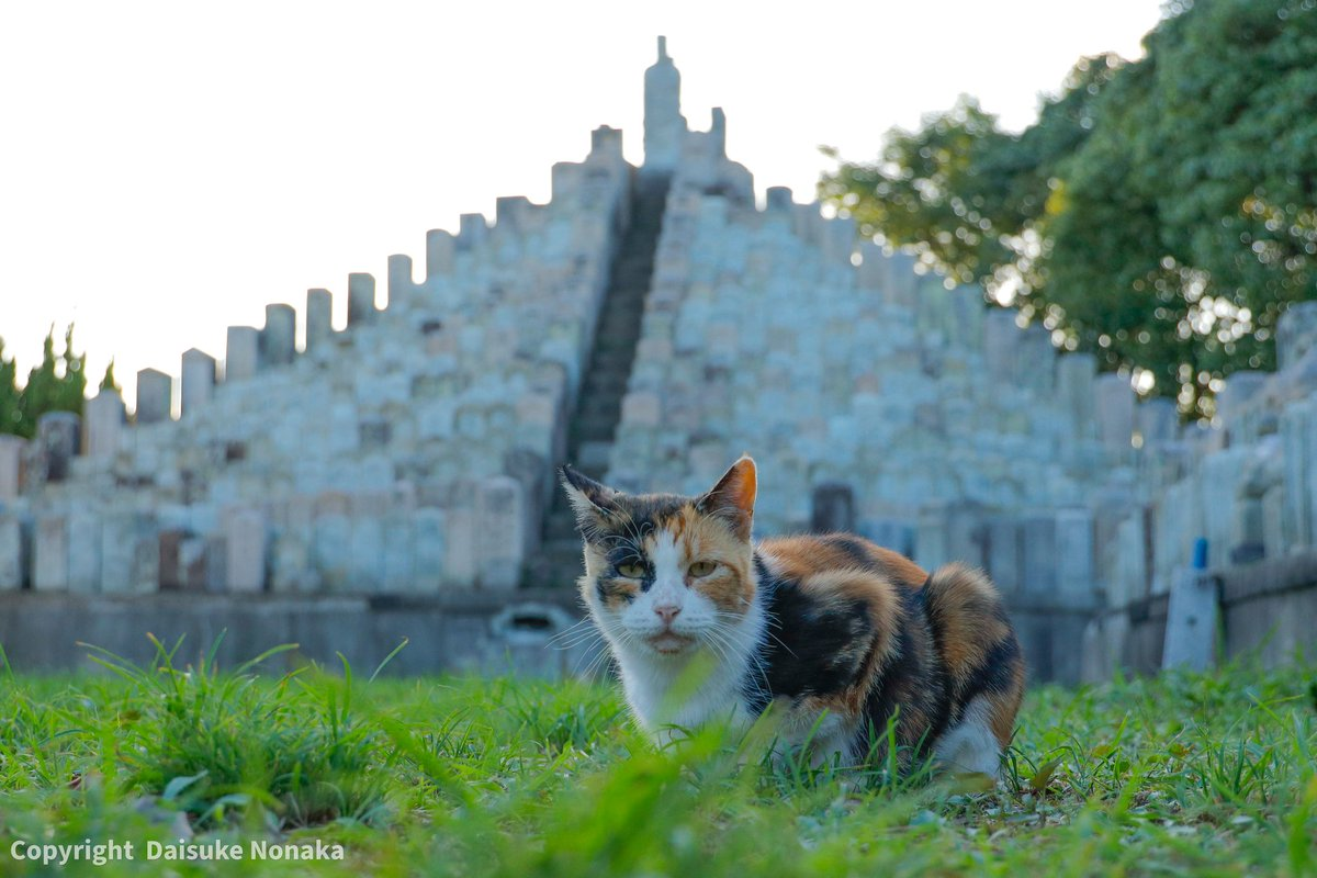 #猫目線 #僕らの居場所は言わにゃいで #猫 #外猫 #野良猫 #地域猫 #さくらねこ #猫写真 #猫ポトレ部 #にゃんすたぐらむ #cat #straycat #catportrait #catstagram #catsofinstagram #canon #eosr #rf24105f4l https://t.co/YwNhfoP0Kc