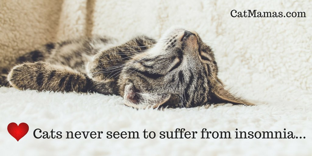 25 purrfectly natural reasons to love cats | ❤ 14. A #cat can sleep anywhere, anytime (and often … ALL the time). https://t.co/F1mGG1JSh6