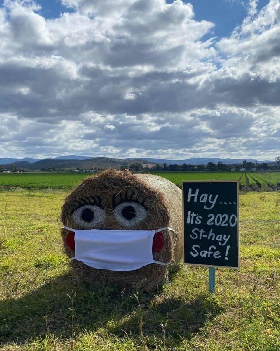 Hay season is upon us, virus free 🌾  #GBA #grainbrokersaustralia #letsgrowtogether #agriculture #agribusiness #ruralbusiness #farming #farmers #weareausfarmers #GenerationAg#AllthingsAgriculture #hayseason #season #hay #cuttinghay #virusfree #covid19 #staysafe #2020 https://t.co/AUW4GAVn2o