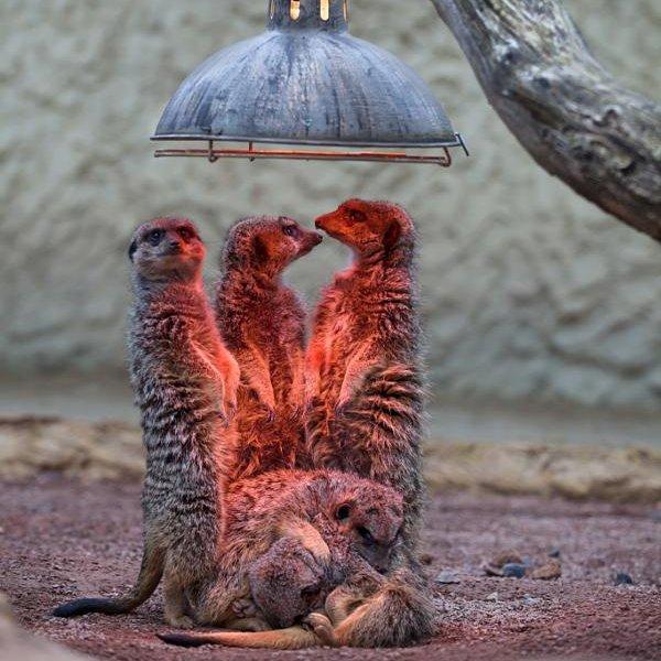 🐾💫🤗 #cute #animals #animaux https://t.co/m1Hd5B3Baq
