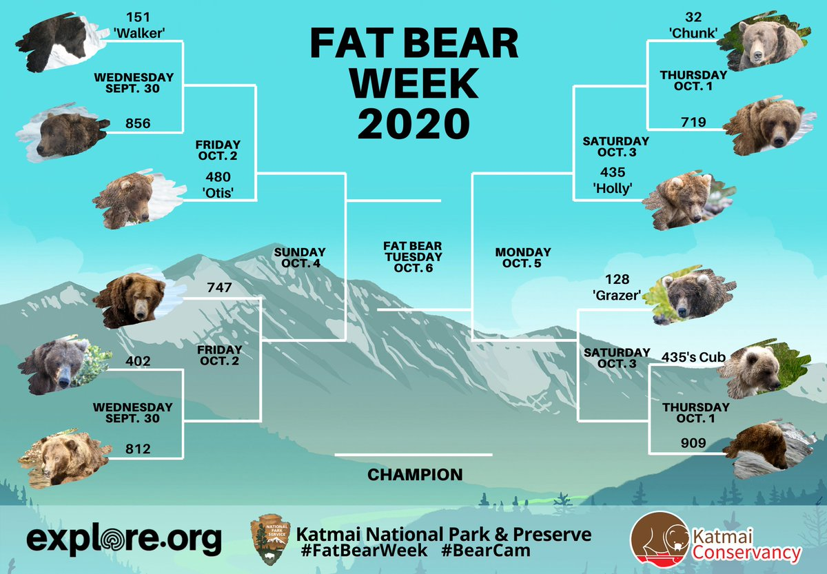 Don't see @RussianBear on here. Diet must be working. #FatBearWeek